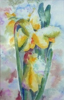 Snow-covered Daffodils I