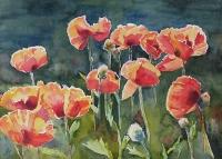Poppies!!!