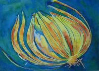 Colourful Onion