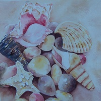 Shells by the Shore