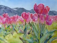 Amazing Tulips!