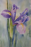 Dutch Iris (Right panel of tryptic)