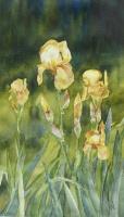 Gladys' Irises